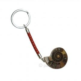 Llavero Ammonites