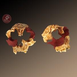 Cráneo Homo antecessor