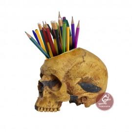 Cráneo maceta portalápices sapiens