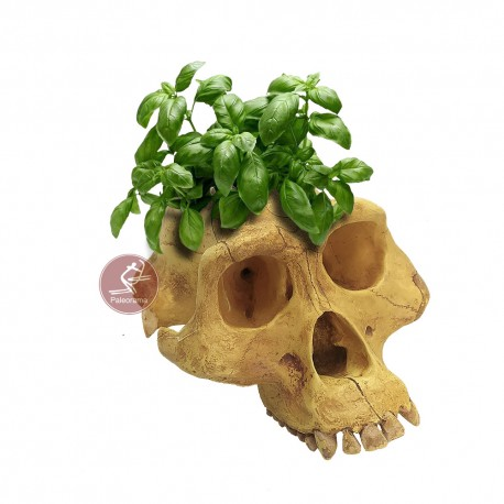 Cráneo maceta portalápices Lucy