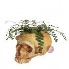 Cráneo maceta portalápices neandertal